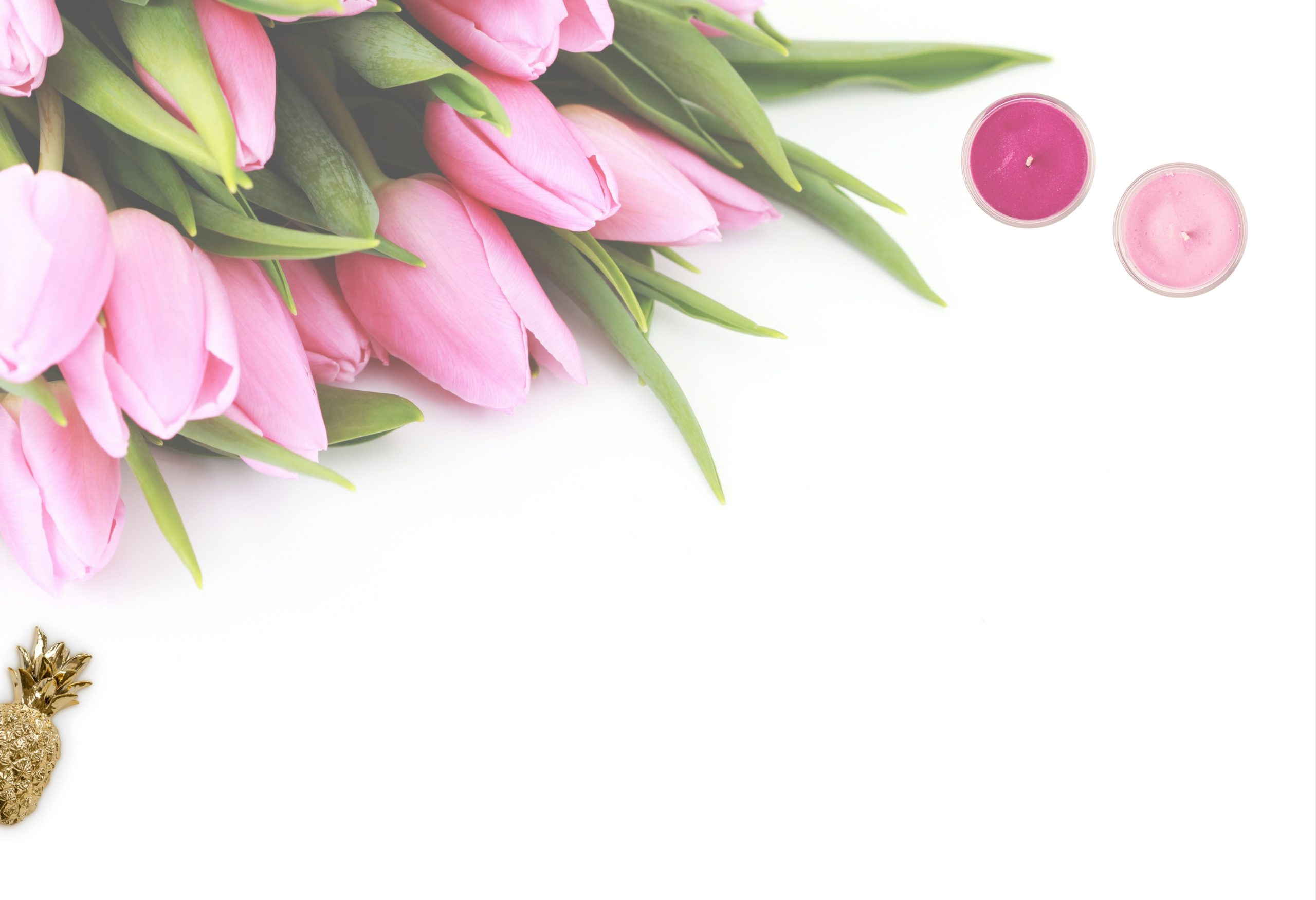pink tulip flowers with white background 768939 scaled - Wimpernverlängerung Kurs